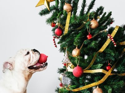 Dog stting next to Christmas tree